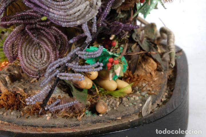Antigüedades: Conjunto Pájaros disecados taxidermia siglo XIX - Foto 9 - 243865560