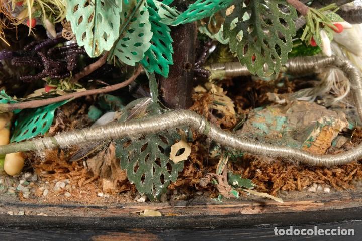 Antigüedades: Conjunto Pájaros disecados taxidermia siglo XIX - Foto 10 - 243865560