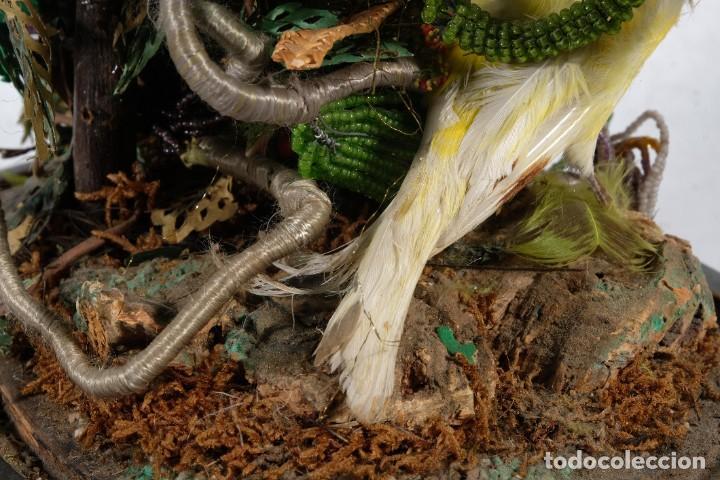 Antigüedades: Conjunto Pájaros disecados taxidermia siglo XIX - Foto 11 - 243865560
