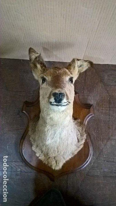 Antigüedades: Corzo hembra - Foto 3 - 244991765