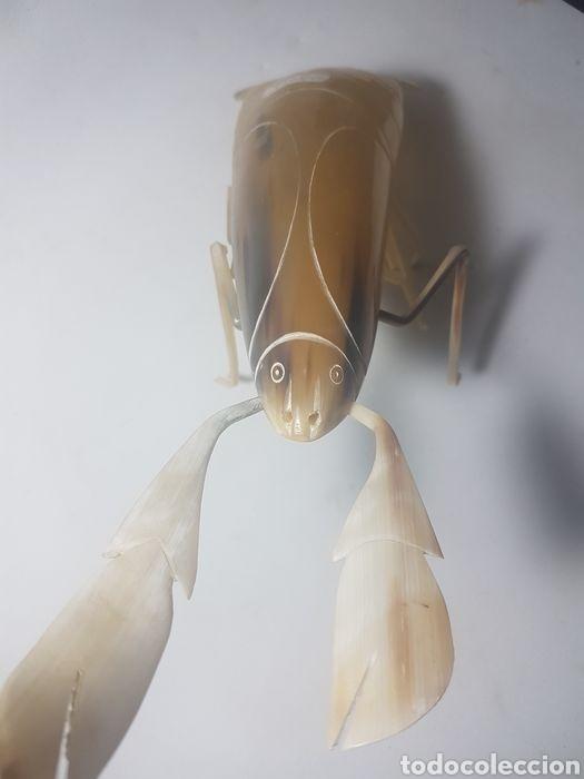 Antigüedades: Langosta tallada en asta de Cebú taxidermia - Foto 3 - 247811895
