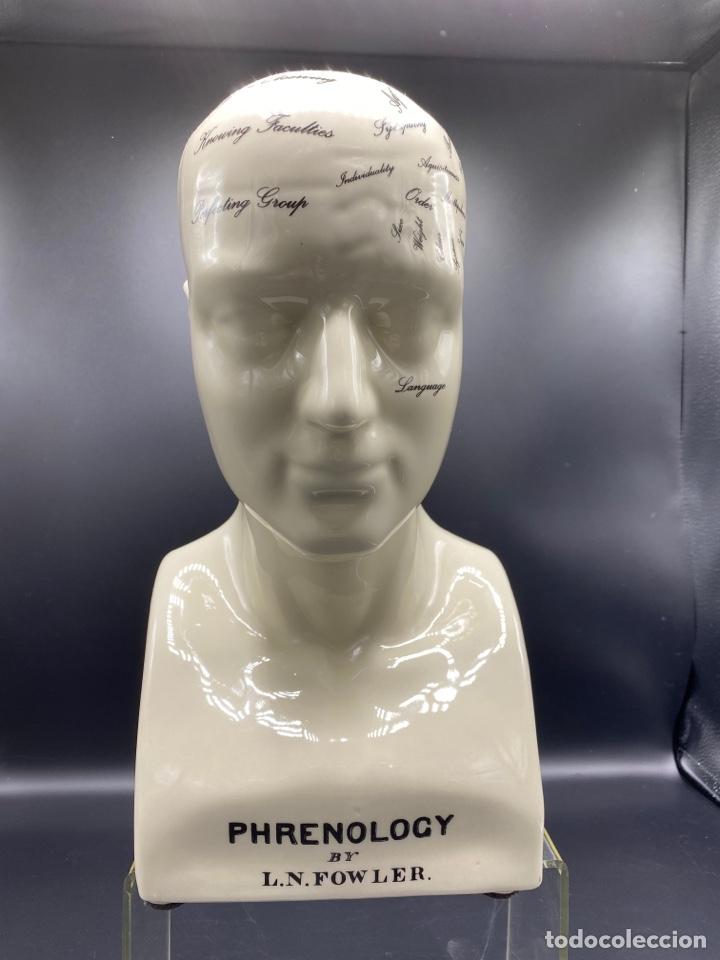 Antigüedades: Cabeza Grande de Frenologia porcelana - Foto 2 - 249282910