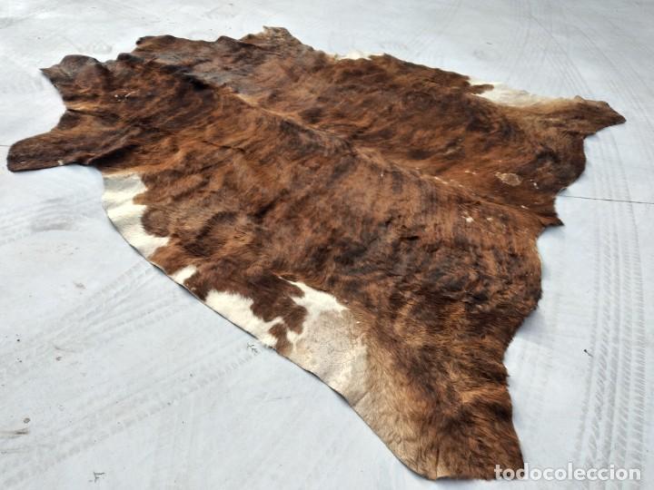 Antigüedades: Extraordinaria alfombra de piel de vaca, original preciosos tonos marrones. - Foto 5 - 251058165