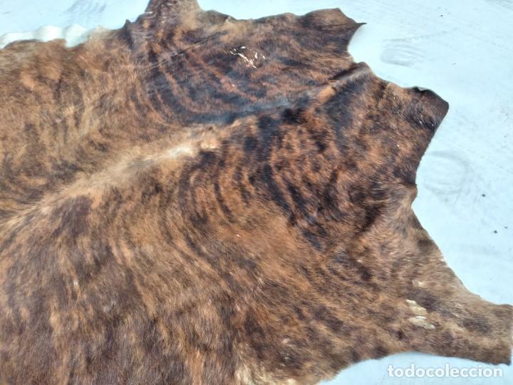 Antigüedades: Extraordinaria alfombra de piel de vaca, original preciosos tonos marrones. - Foto 12 - 251058165