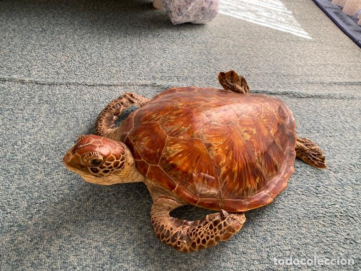 Antigüedades: Tortuga marina disecada Taxidermia - Foto 3 - 251962670