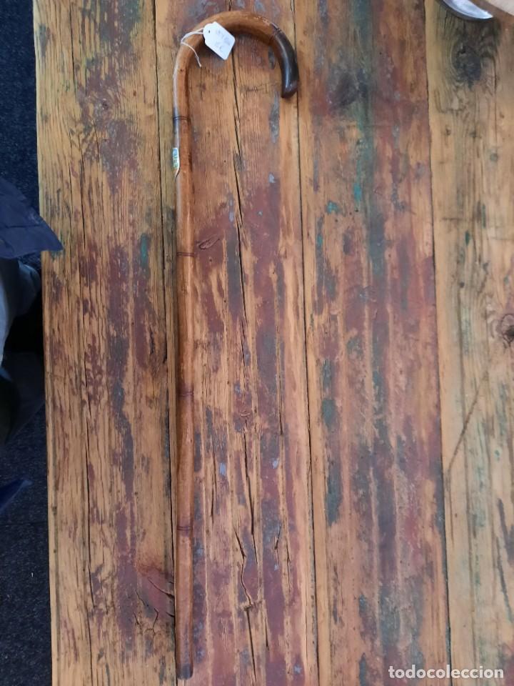 Antigüedades: Baston alpino de caña - Foto 2 - 253476375