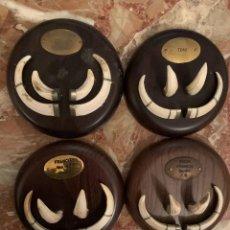 Antigüedades: TABLILLAS DE COLMILLOS DE JABALÍ. Lote 253511460