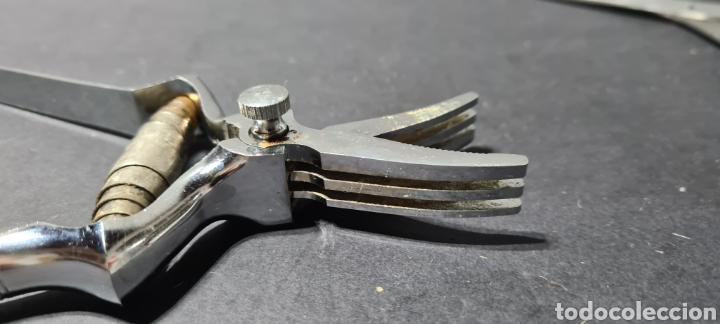 Antigüedades: Antiguas tijeras. Masticador de carne o otros alimentos. - Foto 4 - 254363240