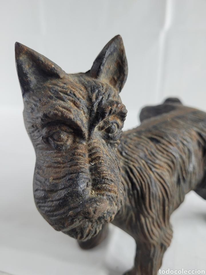 Antigüedades: Terrier sujeta Puertas año aprox 1940 - Foto 7 - 254742615