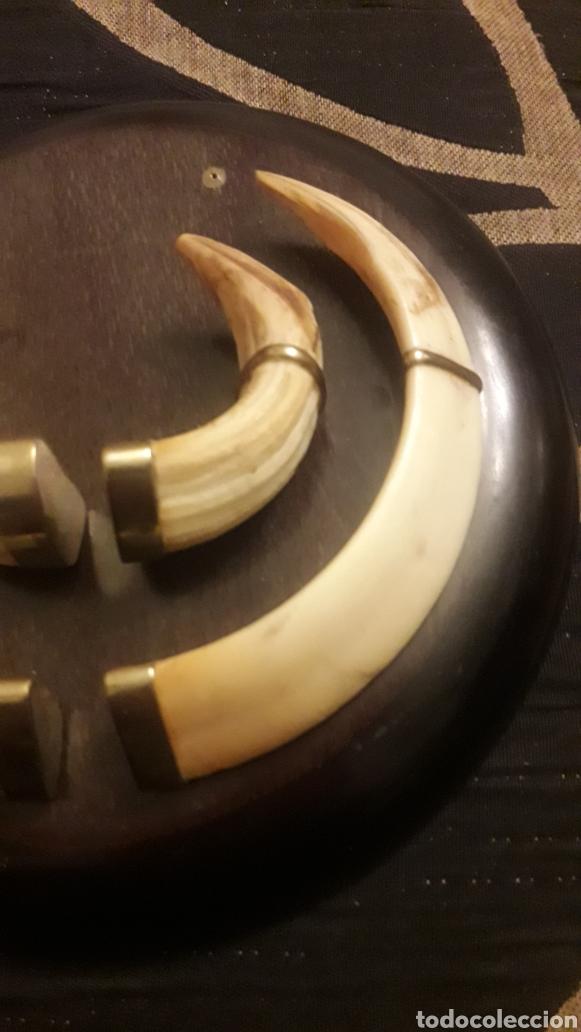 Antigüedades: Antiguo trofeo de jabalí - Foto 4 - 254821210