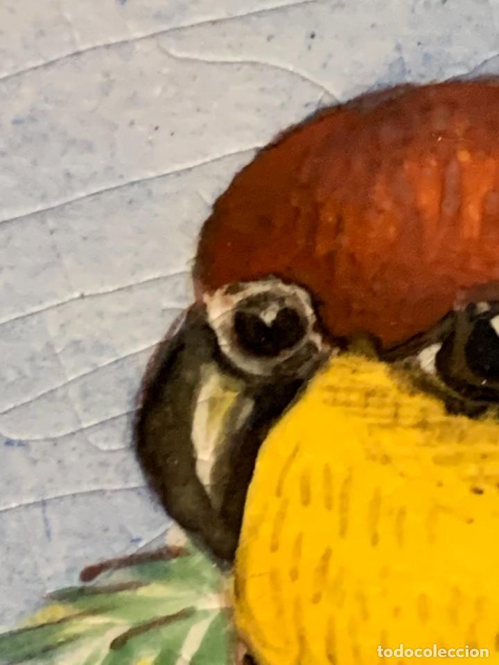 Antigüedades: PLATO PICKMAN SEVILLA CARTUJA DOS PERICOS CARIGUALDOS PLATYCERCUS ICTEROTIS JIMENEZ 1956 4X39CMS - Foto 22 - 255516630