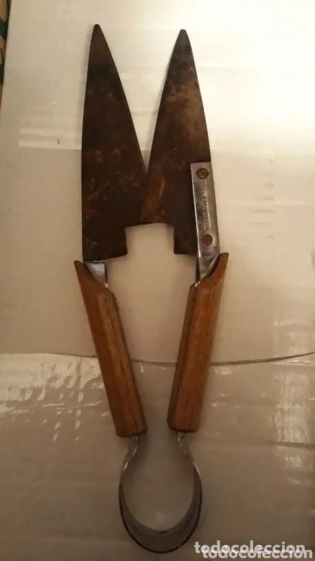 ANTIGUA TIJERA DE ESQUILAR MARCA STAINLESS STEEL (Antigüedades - Técnicas - Rústicas - Ganadería)