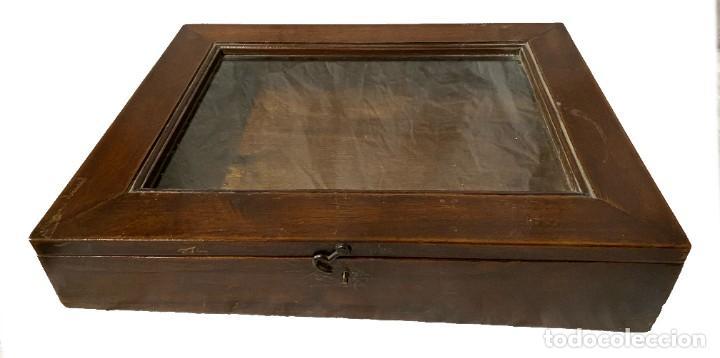 ANTIGUO MUEBLE PARA METER COLECCIONES, VITRINA EXPOSITOR. DE NOGAL. S. XIX. (Antigüedades - Muebles Antiguos - Vitrinas Antiguos)