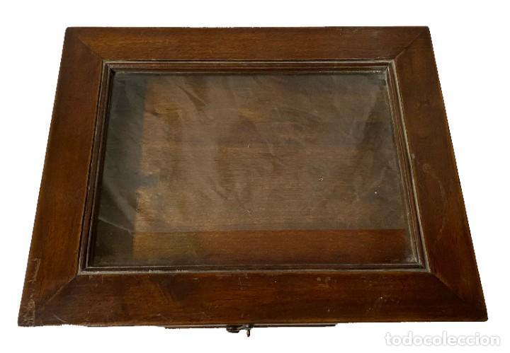Antigüedades: Antiguo mueble para meter colecciones, vitrina expositor. de nogal. S. XIX. - Foto 2 - 259709450