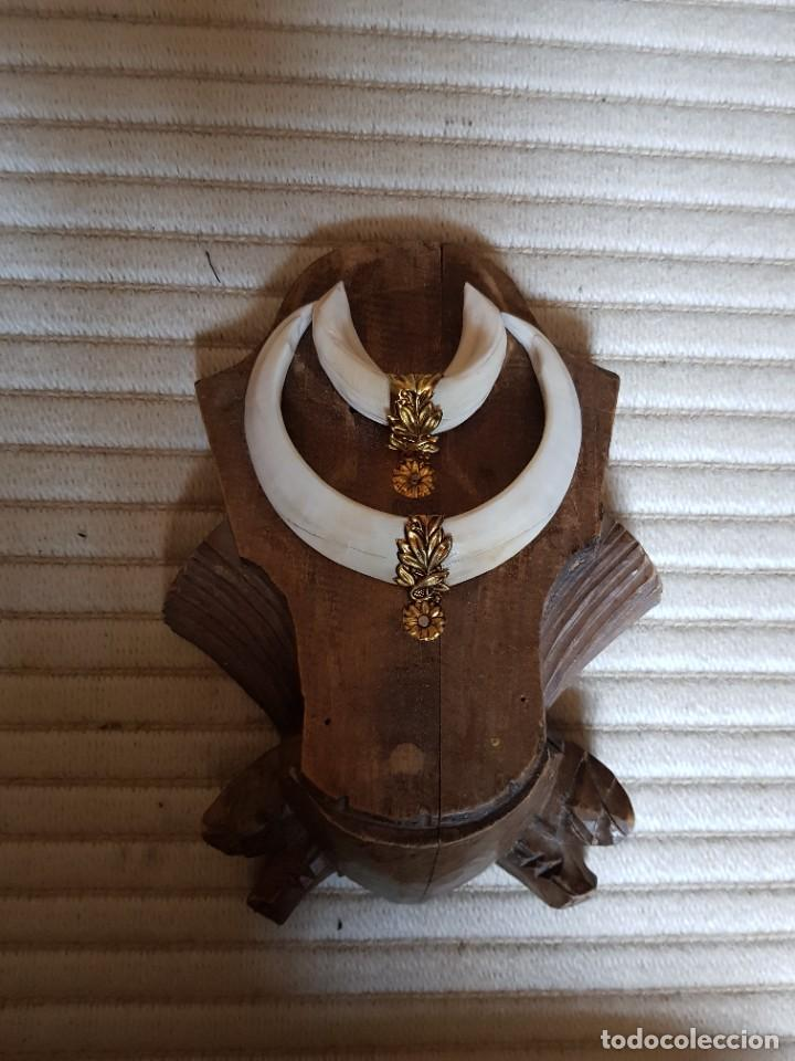 Antigüedades: Colmillo trofeo madera tallada alfonsino marfil antiguo embellecedor de metal. - Foto 3 - 261226145