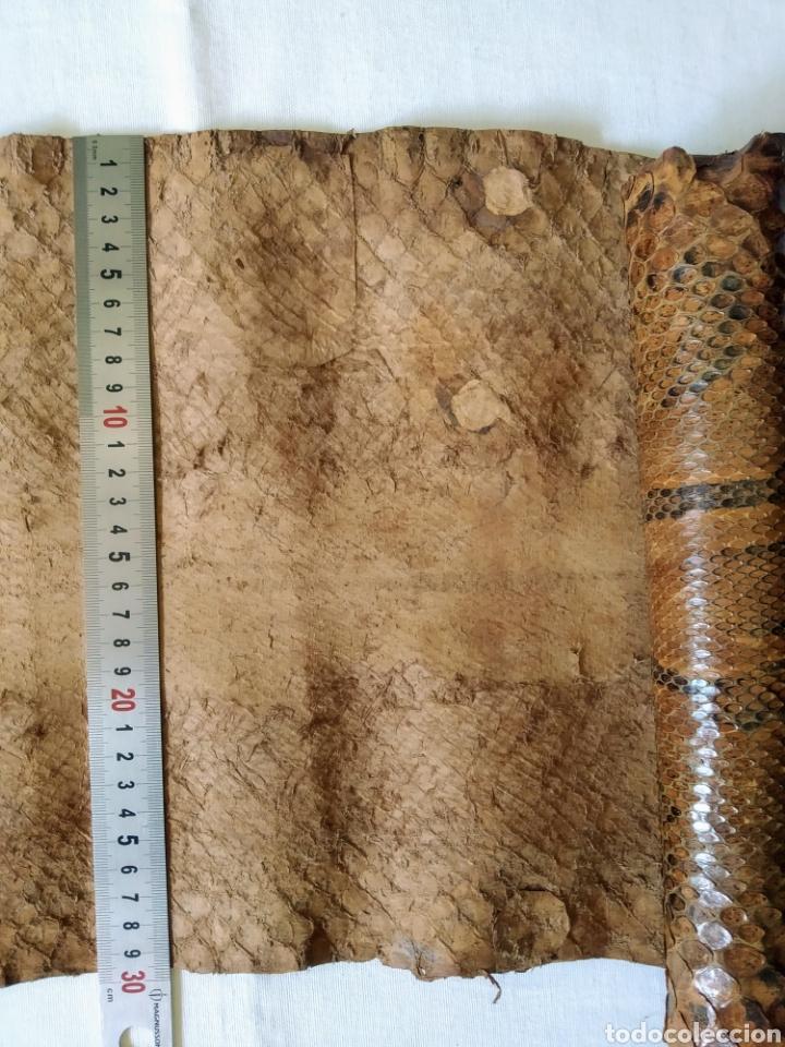 Antigüedades: ANTIGUA PIEL CURTIDA DE SERPIENTE 3.65 m. - Foto 7 - 268752074