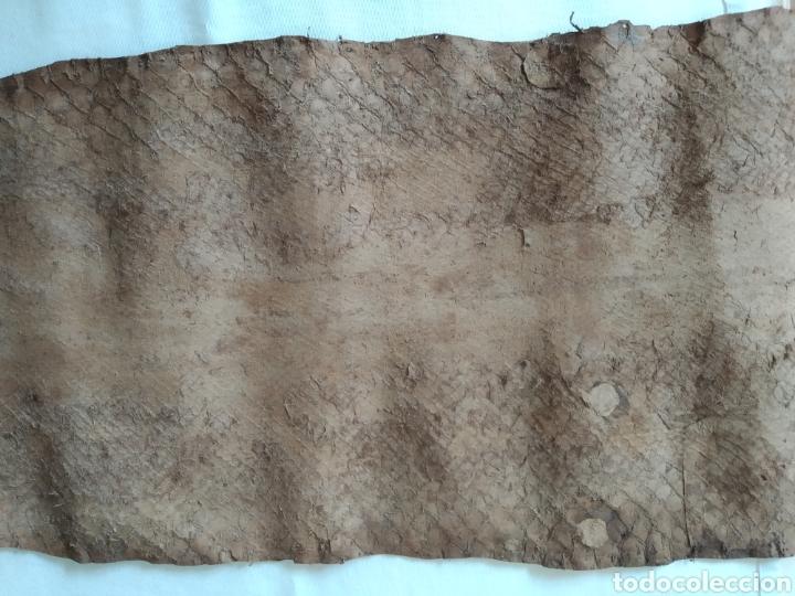 Antigüedades: ANTIGUA PIEL CURTIDA DE SERPIENTE 3.65 m. - Foto 9 - 268752074