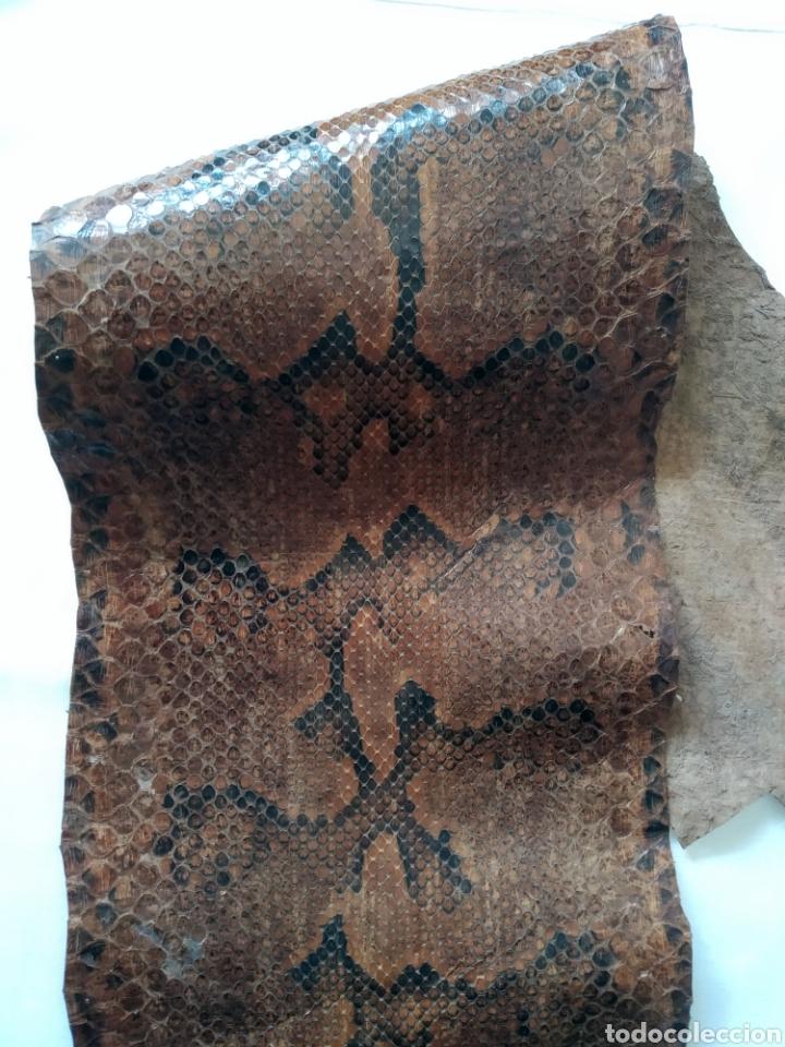 Antigüedades: ANTIGUA PIEL CURTIDA DE SERPIENTE 3.65 m. - Foto 11 - 268752074
