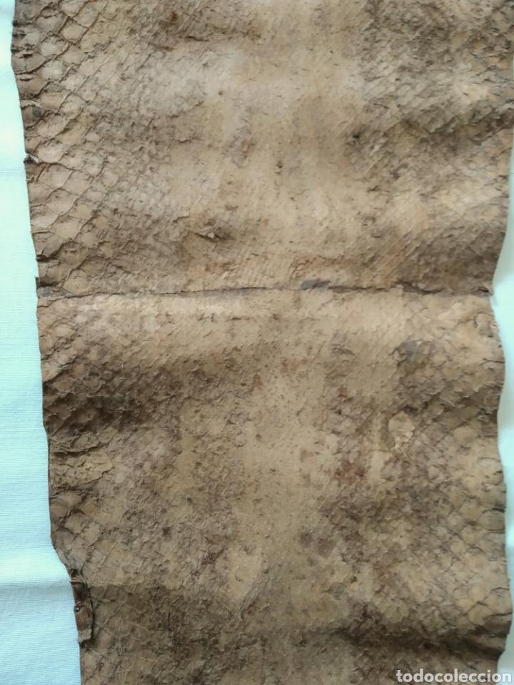 Antigüedades: ANTIGUA PIEL CURTIDA DE SERPIENTE 3.65 m. - Foto 12 - 268752074