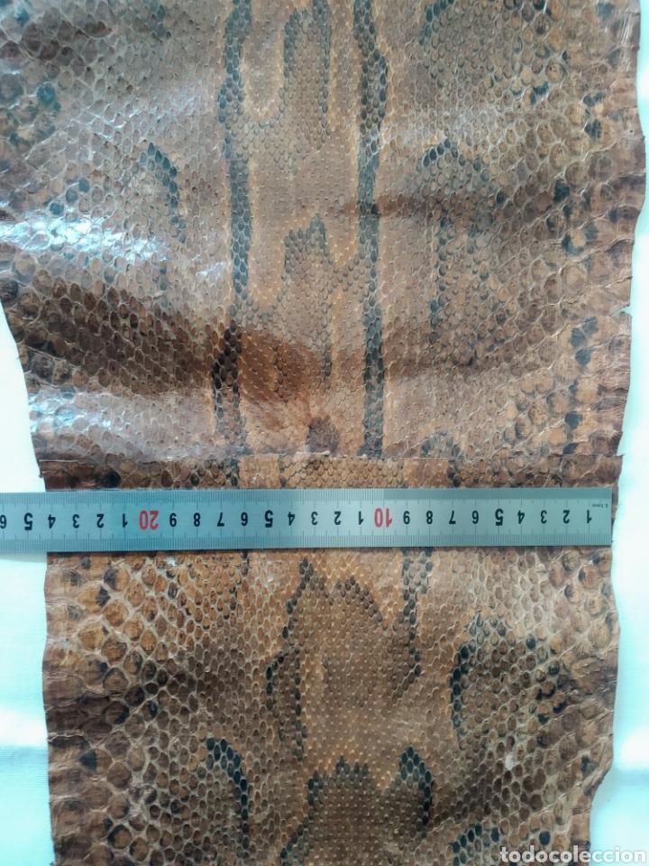 Antigüedades: ANTIGUA PIEL CURTIDA DE SERPIENTE 3.65 m. - Foto 14 - 268752074