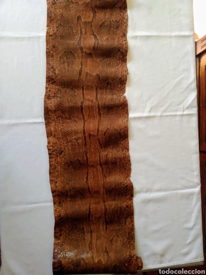 Antigüedades: ANTIGUA PIEL CURTIDA DE SERPIENTE 3.65 m. - Foto 17 - 268752074