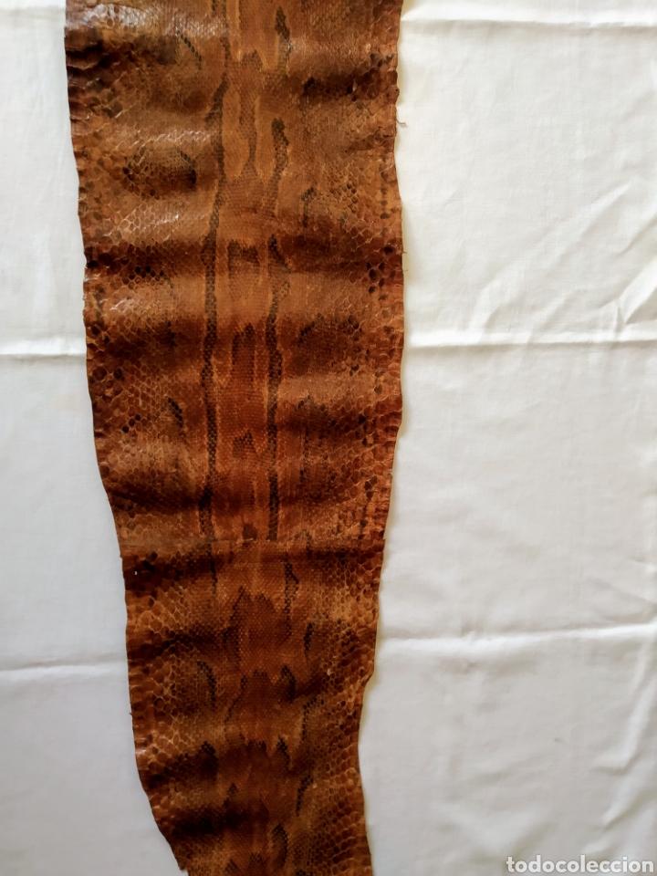 Antigüedades: ANTIGUA PIEL CURTIDA DE SERPIENTE 3.65 m. - Foto 18 - 268752074