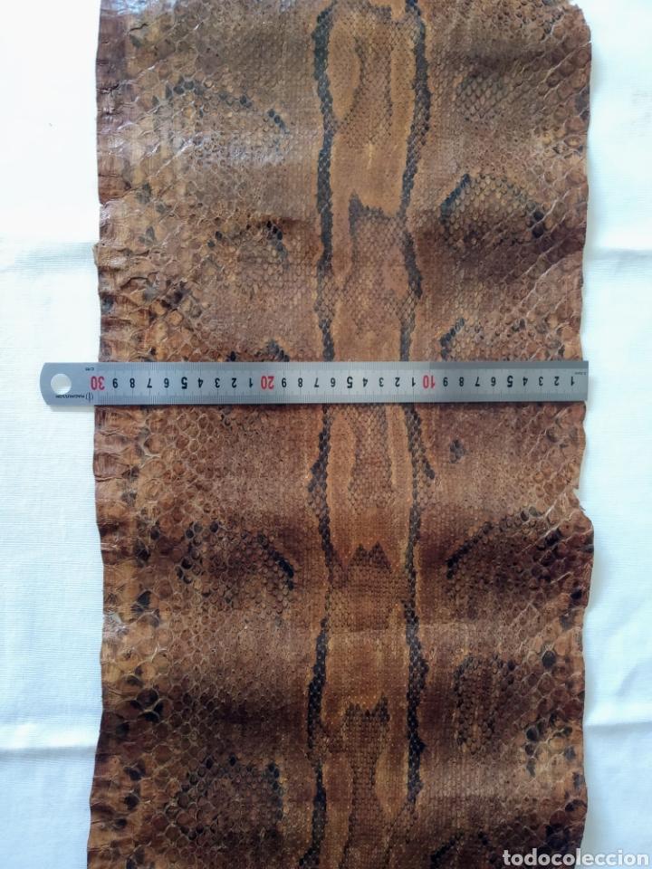 Antigüedades: ANTIGUA PIEL CURTIDA DE SERPIENTE 3.65 m. - Foto 19 - 268752074