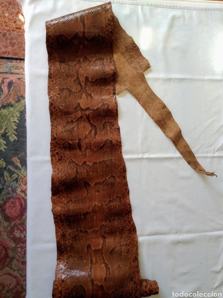 ANTIGUA PIEL CURTIDA DE SERPIENTE 3.65 M. (Antigüedades - Hogar y Decoración - Trofeos de Caza Antiguos)