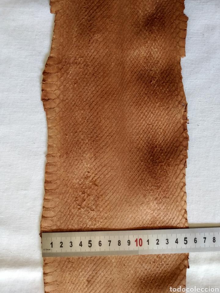 Antigüedades: ANTIGUA PIEL CURTIDA DE SERPIENTE 2.55 m. - Foto 2 - 268754564