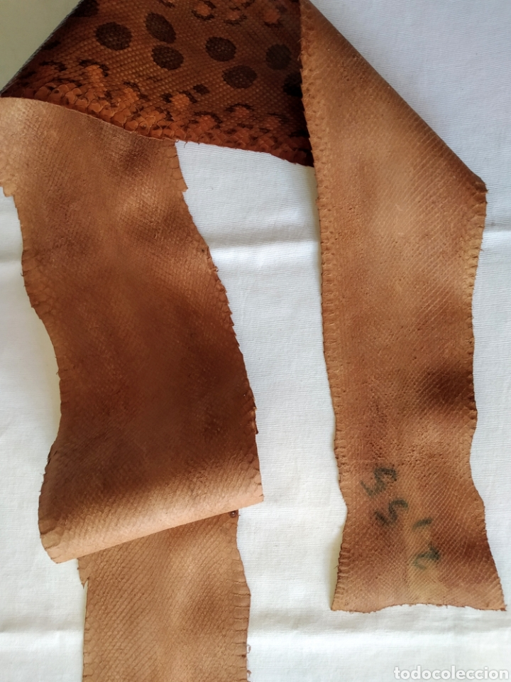 Antigüedades: ANTIGUA PIEL CURTIDA DE SERPIENTE 2.55 m. - Foto 3 - 268754564