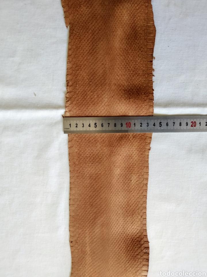 Antigüedades: ANTIGUA PIEL CURTIDA DE SERPIENTE 2.55 m. - Foto 5 - 268754564