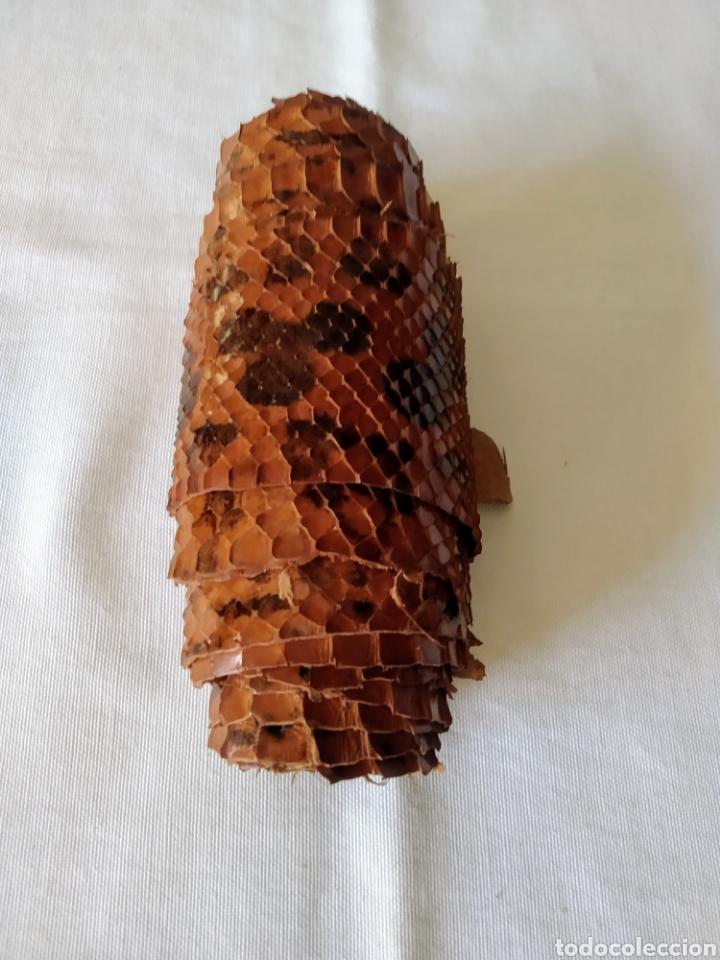 Antigüedades: ANTIGUA PIEL CURTIDA DE SERPIENTE 2.55 m. - Foto 6 - 268754564