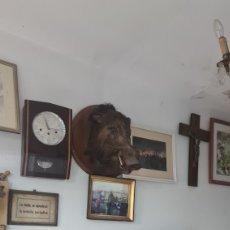 Antigüedades: JABALI CAZADO EN 1899. Lote 272221283
