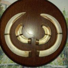 Antiguidades: JABALI ANTIGUOS GRANDES COLMILLOS Y CUERNOS ORIGINALES ENMARCADOS. Lote 273401483