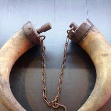 Antigüedades: ANTIGUOS CUERNOS DE TORO USADOS COMO CANTIMPLORA, ARTE PASTORIL EN MUY BUEN ESTADO. Lote 285458238
