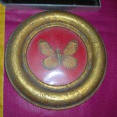 Antigüedades: MINIATURA MARCO MADERA REDONDO PAN DE ORO CON MARIPOSA IDEAL PARA GRABADOS RELIGIOSOS. Lote 293971983