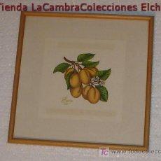 Arte: BONITA ACUARELA CON RAMO DE FRUTAS , FIRMADO PIESCU , ENMARCADO, AÑOS 70/80, .. Lote 6439279