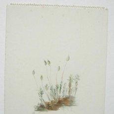 Arte: BELLA ACUARELA - FLORES - NO FIRMADA. Lote 26830713