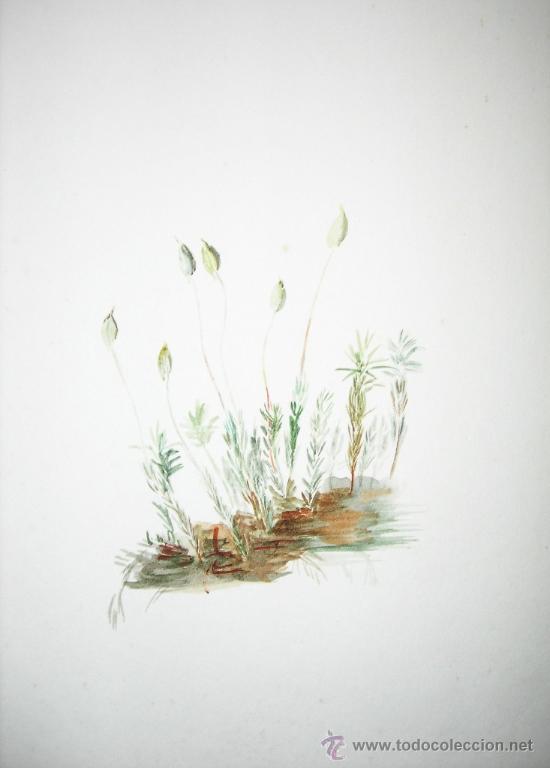 Arte: BELLA ACUARELA - FLORES - NO FIRMADA - Foto 2 - 26830713