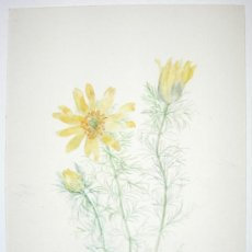 Arte: BELLA ACUARELA - FLORES - FIRMADA Y DATADA EN 1946. Lote 26830717