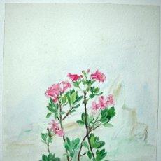Arte: BELLA ACUARELA - FLORES - NO FIRMADA. Lote 26830719