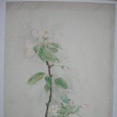 Arte: BELLA ACUARELA - FLORES - DATADA EN 1946. Lote 26852552