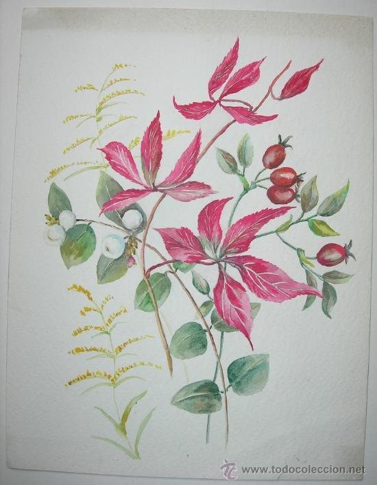 BELLA ACUARELA - FLORES - NO FIRMADA (Arte - Acuarelas - Contemporáneas siglo XX)