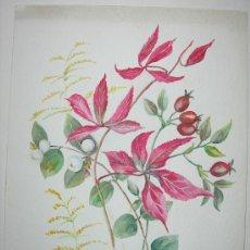 Arte: BELLA ACUARELA - FLORES - NO FIRMADA. Lote 26852553