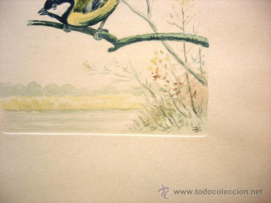 Arte: BELLA ACUARELA - CARBONERO COMUN - FIRMADA EN MONOGRAMA - Foto 3 - 26875083