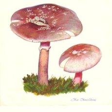 Arte: MICOLOGIA. 4 ACUARELAS ORIGINALES DE DISTINTAS SETAS.REALIZADAS POR FCO. FONOLLOSA. 30 X 25 CM. . Lote 39243541