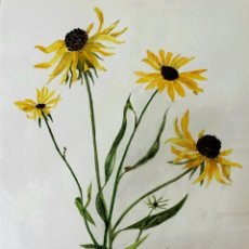 Arte: ESTUPENDA ACUARELA ORIGINAL, FECHADA 1965, RUDBECKIA, BLACK EYE SUSAN.. Lote 43658462