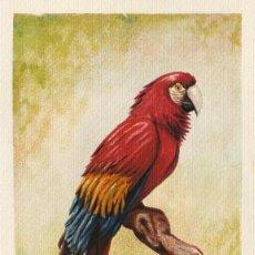 Arte: ACUARELA-GUACAMAYO ROJO - OBRA ORIGINAL -. Lote 33435770