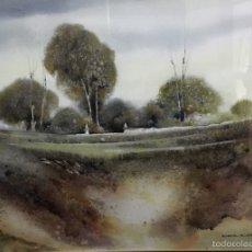 Arte: EL BOSQUE DE BRUGALLA. Lote 56482825