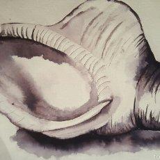 Arte: ACUARELA CARACOLA 42X30CM FIRMA ILEGIBLE.. Lote 58139944